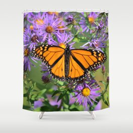 Monarch Butterfly on Wild Asters (square) Shower Curtain