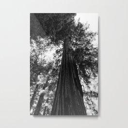 Sequoia National Park V Metal Print