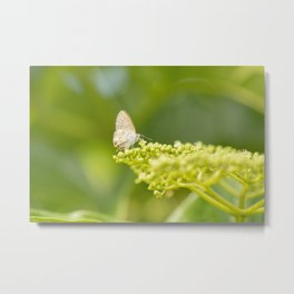 Speckled Line-Blue butterfly Metal Print