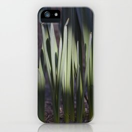 Spring daffodils bulbs in the morning iPhone Case