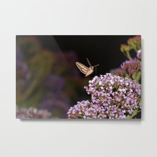 Hummingbird Hawk Moth Metal Print