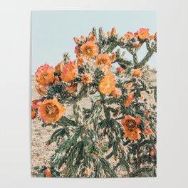 Cholla, Orange Flowering Cactus Poster