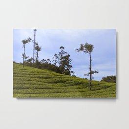 Tea Gardens - Photography Art Metal Print