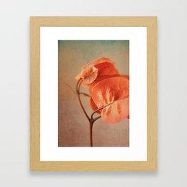 Sunny Bougainville(6) Framed Art Print