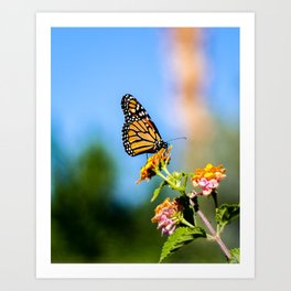 Monarch Visitor Art Print