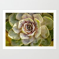 Hen and Chick Cactus Art Print
