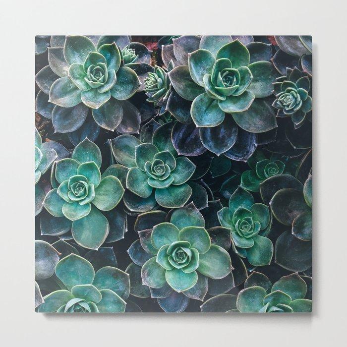 Succulent Blue Green Plants Metal Print