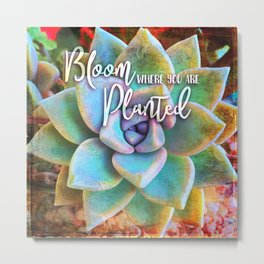 """Bloom where you are planted"" mint green & turquoise cactus close-up photo Metal Print"