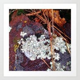 Lichen Rock and Moss Art Print
