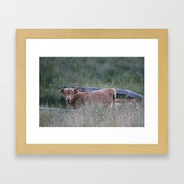 Higland Cow On The Lookout Framed Art Print