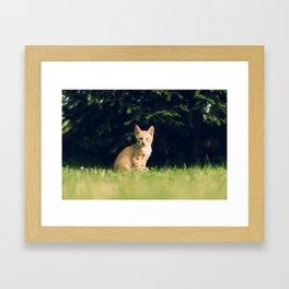 One Eyed Cat Framed Art Print
