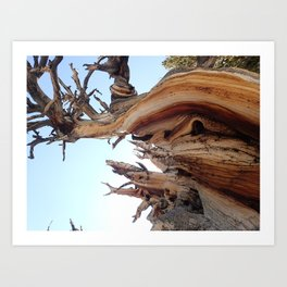 Trees twisting in the wind Art Print