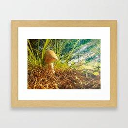Magic Mushroom  Morning Framed Art Print