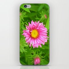little aster iPhone & iPod Skin