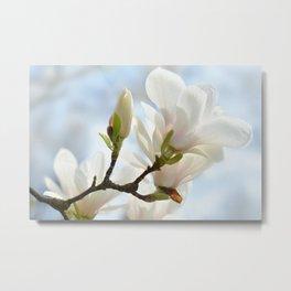 Magnolia 0139 Metal Print