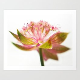 pink with green against white Art Print