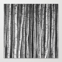 Birch || Canvas Print