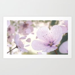 Plum Blossoms Art Print