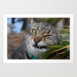 Cat Snack Art Print