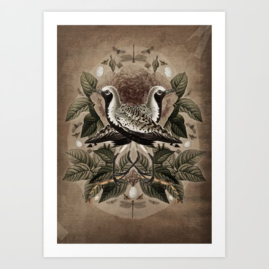 Pluvialis squatarola Art Print