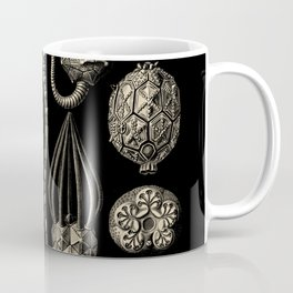 """Cystoidea"" from ""Art Forms of Nature"" by Ernst Haeckel Coffee Mug"