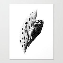 Acorn Woodpecker Canvas Print