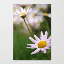 Sunshine on a rainy day#4 Canvas Print