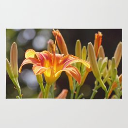 Lilies in the Sunshine Rug