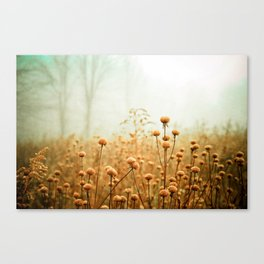 Daybreak in the Meadow Canvas Print