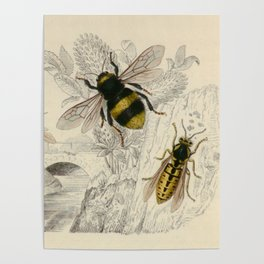 Naturalist Bee And Wasps Poster
