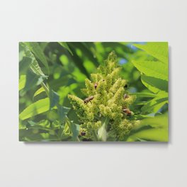 Pollination of sumac flower Metal Print
