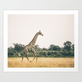 Art Print / Giraffe Art Print