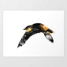 Oriole Art Print
