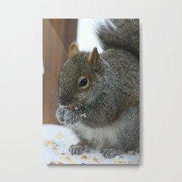 Mr. Grey Squirrel Metal Print