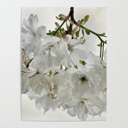 SPRING BLOSSOMS - IN WHITE - IN MEMORY OF MACKENZIE Poster
