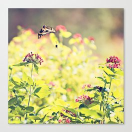 Sunlight Waltz Canvas Print