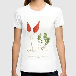 Edward Joseph Lowe - Hymenophyllum Cruentum and H. Tunbridgense T-shirt