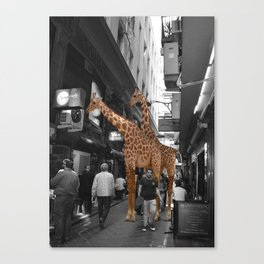 Safary in City. African Invasion. Canvas Print