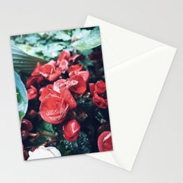 Flowers After The Rain Stationery Cards