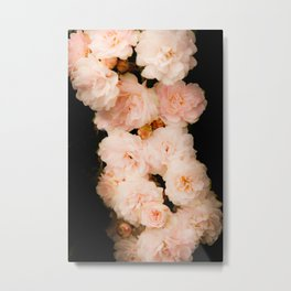Small pink roses  Metal Print