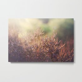 Colourful Heather Metal Print