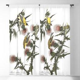 American goldfinch, Birds of America, Audubon Plate 33 Blackout Curtain