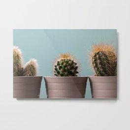 Three baby cactus Metal Print