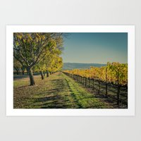Napa Valley in Fall :: From Green to Gold Art Print