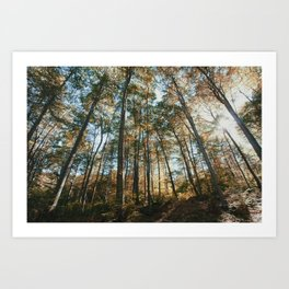 into the woods 08 Art Print
