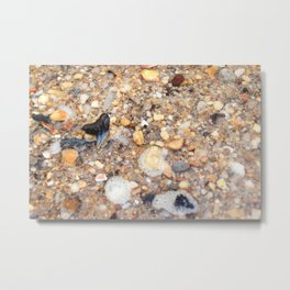 Virginia - Find the Fossil Shark Tooth Metal Print