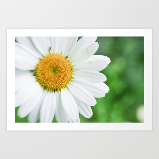 The White Daisy Art Print