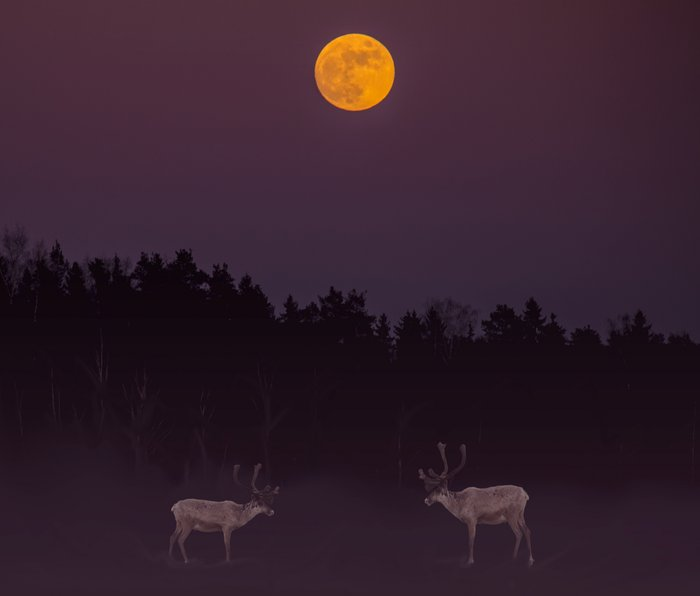 Full Moon - Winter Night With Reindeer At Edge Of Forest #decor #buyart #society6 Metal Travel Mug