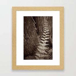 Single Copper Fern Framed Art Print