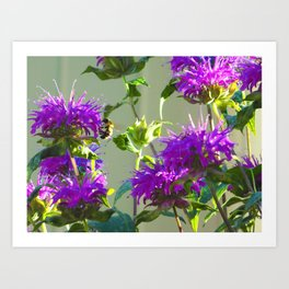 Busy Bee #2 Art Print